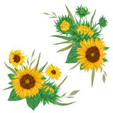 Sunflowers set. Collection decorative floral design elements for wedding invitations and birthday cards. Royalty Free Stock Photography