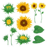 Sunflowers set. Collection decorative floral design elements for wedding invitations and birthday cards. Royalty Free Stock Image