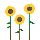 Sunflowers silhouettes, isolated on white. Sunflowers silhouettes, graphic elements for designer - 2d vector Royalty Free Stock Image
