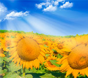 Sunflowers on sky Stock Photos