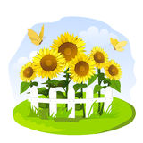 Sunflowers in a small garden. Vector illustration Royalty Free Stock Photos