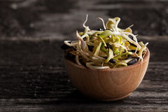Sunflowers Sprouts in a Wooden bowl. Close-up of Sunflowers Sprouts in a Wooden bowl Stock Photos