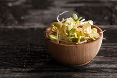 Sunflowers Sprouts in a Wooden bowl. Close-up of Sunflowers Sprouts in a Wooden bowl Royalty Free Stock Image