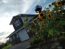 Sunflowers & Stable. Sunflowers and small stable on a sunny day Royalty Free Stock Photography