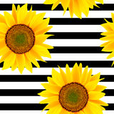 Sunflowers on a striped black and white. Seamless  pattern Stock Photo