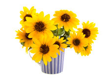 Sunflowers in a striped mug. On white background Stock Photo