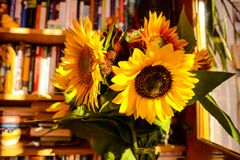 Sunflowers in the study. A rich bouquet of sunflowers in the home office stock image