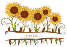 Sunflowers, summer. Beautiful sunflowers, floral element, summer time Stock Photo
