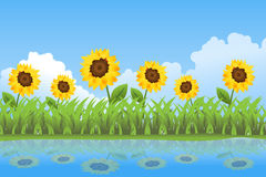Sunflowers summer day background. Illustration of a summer day with a meadow of yellow sunflowers that are reflex on water.EPS file available Stock Photos