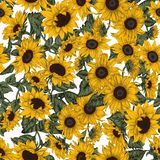 Sunflowers. Seamless background in vintage style. Sunflowers. Summer in the village. Agriculture. Garden. Sunflowers. Seamless background in vintage style royalty free illustration
