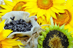 Sunflowers and sunflower seeds Royalty Free Stock Photography
