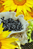Sunflowers and sunflower seeds in bag Stock Photography