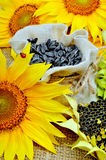 Sunflowers and sunflower seeds in bag Stock Photos