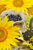 Sunflowers and sunflower seeds Royalty Free Stock Photo