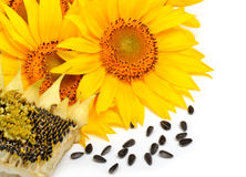 Sunflowers and sunflower seeds isolated on white background Royalty Free Stock Photo