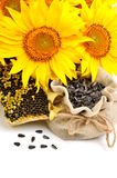 Sunflowers and sunflower seeds isolated on white background Royalty Free Stock Photography