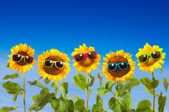 Sunflowers with sunglasses Royalty Free Stock Images