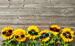 Sunflowers with sunglasses. On wooden board Stock Photography