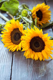 Sunflowers on table Royalty Free Stock Image