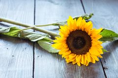 Sunflowers on table Stock Image