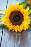 Sunflowers on table Royalty Free Stock Photo