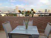 Sunflowers of Tel-. City view of tel-aviv Stock Photos