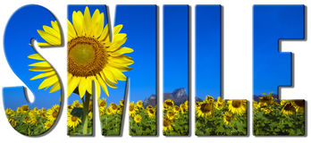 Sunflowers text - smile. Smile text filled with an image of sunflowers field Royalty Free Stock Photography