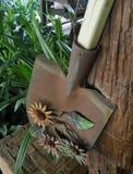 Sunflowers on tin shovel in flower field in Spring time Stock Image