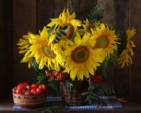 Sunflowers and tomatoes. Rustic still life of flowers and vegeta Stock Photo