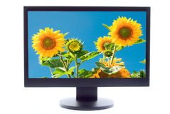 Sunflowers on TV screen Stock Photos