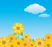 Sunflowers under the sky. Background Royalty Free Stock Photos