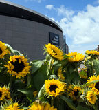 Sunflowers and Van Gogh museum. 5 and 6 september 2015, Amsterdam, Museum Square, Festive Opening of New Entrance Hall van Gogh Museum Stock Photography