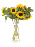 Sunflowers in a vase. Studio cutout Royalty Free Stock Images