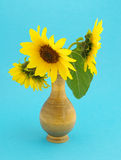 Sunflowers in vase. Still life.three sunflowers in vase on  blue  background Royalty Free Stock Images