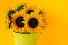 Sunflowers in vase royalty free stock photo