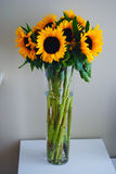 Sunflowers in vase. Cut flowers, long vase, interior feature, bouquet Royalty Free Stock Images