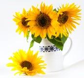Sunflowers in vase isolated. Beautiful fresh sunflowers in vase on white backrgound royalty free stock image