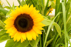 Sunflowers in a vase Stock Photos