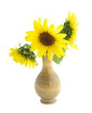Sunflowers in vase on white. Still life.three sunflowers in bowl isolated Royalty Free Stock Images