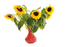 Sunflowers in vase. On the white background Stock Photos