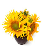 Sunflowers in a vase Stock Photography