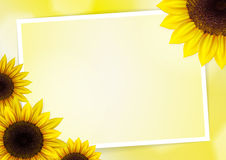 Sunflowers vector background Stock Photo