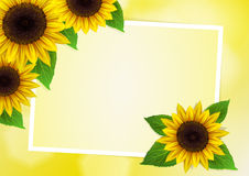 Sunflowers vector background Royalty Free Stock Photo