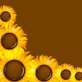 Sunflowers vector illustration background vector Stock Images