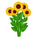 Sunflowers. Vector illustration. Symbol of summer, sun and happi. Sunflowers. Bouquet of yellow flowers isolated on white background. Vector illustration Royalty Free Stock Photo
