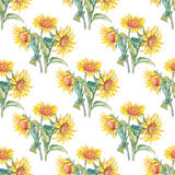 Sunflowers vector pattern watercolor. Stock Photos