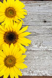 Sunflowers on Vintage Wood Royalty Free Stock Images