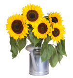 Sunflowers in a water can Royalty Free Stock Image