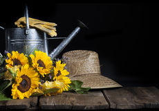 Sunflowers Watering Can Royalty Free Stock Photography