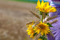 Sunflowers and wheat bouquet Royalty Free Stock Image